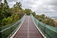 Een hangende het lopen brug over de bomen in Koningenpark in Perth Stock Foto's