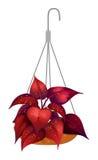 Een hangende rode installatie Stock Foto