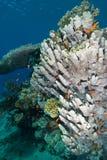 Een heatlhy koraalrif Stock Afbeeldingen