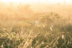 Een helder, gouden landschap van een moeras na de zonsopgang Het heldere, witte lichte gieten over het landschap Stock Afbeelding