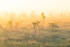 Een helder, gouden landschap van een moeras na de zonsopgang Het heldere, witte lichte gieten over het landschap Royalty-vrije Stock Foto