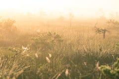 Een helder, gouden landschap van een moeras na de zonsopgang Het heldere, witte lichte gieten over het landschap Stock Foto's