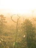 Een helder, gouden landschap van een moeras na de zonsopgang Het heldere, witte lichte gieten over het landschap Royalty-vrije Stock Foto's
