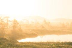 Een helder, gouden landschap van een moeras na de zonsopgang Het heldere, witte lichte gieten over het landschap Royalty-vrije Stock Afbeelding