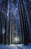 Een heldere bal die van licht een opheldering in het hout verlichten Stock Foto