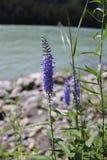 Een heldere bloem op achtergrond van water stock foto
