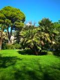 Een heldere de zomerdag in het park onder green stock afbeeldingen