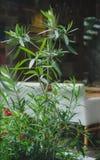 Een heldergroene installatie op een vage ruimteachtergrond Verse hoge houseplants naast een witte bank De ruimte van het exemplaa royalty-vrije stock foto's