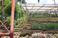 Een hellende gevestigde tuin Royalty-vrije Stock Foto's