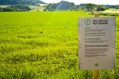 Een hennepgebied in Hesse, m Duitsland Wettelijke hennepcultuur voor geneeskunde of voedsel stock foto's