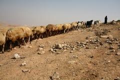 Een herder met troep Stock Foto