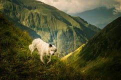 Een herdershond in een Karpatisch landschap Royalty-vrije Stock Foto