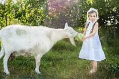Een herdersmeisje in een witte kleding en een bonnet voedt een geit met koolbladeren stock fotografie