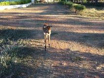 Een hert stock foto's