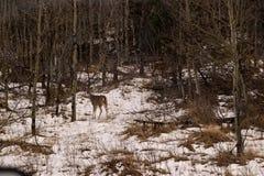 Een hert stock foto