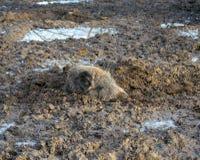 Een hert in het hout stock fotografie