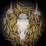 Een hertenschedel op een stapel van kogels Royalty-vrije Stock Fotografie