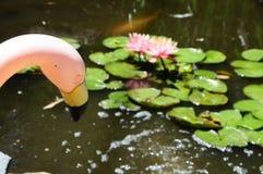 Een het Roze Flamingo en Bloeien Lilypads ` Nymphaeaceae ` Stock Afbeeldingen