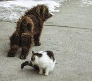Een het slepen hond en een kattenzitting naast hem stock foto's