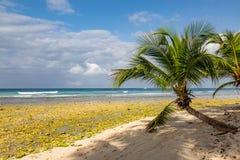 Een het Strandweergeven van Barbados royalty-vrije stock afbeeldingen