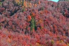 een heuvel van de herfstkleuren stock afbeeldingen