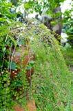Een hoek in de tuin Stock Fotografie