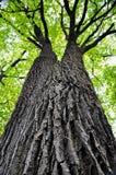 Een hoge boom royalty-vrije stock afbeelding