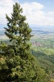 Een hoge spar tegen de Hogere Rijn-vlakte De Elzas, Frankrijk Stock Afbeelding