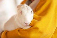 Een hogere mannelijke landbouwer die een wit konijn in zijn leuk landbouwbedrijf koesteren, een pluizig konijntje, de lokale land stock afbeeldingen