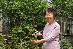 Een hogere vrouw in tuin   Stock Afbeelding
