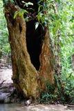 Een holle boom Stock Afbeeldingen