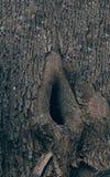 Een holte in een boom stock foto's