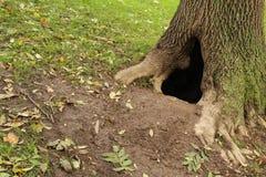Een holte in een boom Stock Afbeelding