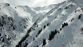 Een hommel vliegt over sneeuwbergen, sparren, een mening van de hemel in de planken stock video