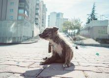 Een hond royalty-vrije stock afbeeldingen
