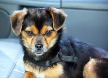 Een hond Royalty-vrije Stock Fotografie