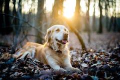 Een hond stock foto's