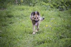 Een hond Royalty-vrije Stock Foto's