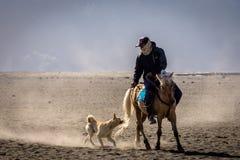 Een hond achtervolgt en bijt de paardstaart van een paardruiter in Bromo stock afbeelding