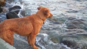 Een hond bevindt zich op het strand Zij loopt vanaf de golf stock videobeelden