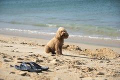 Een hond bij het strand Stock Afbeelding