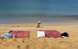Een hond bij het strand Royalty-vrije Stock Foto's