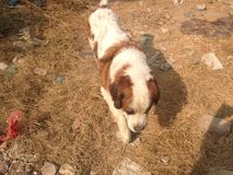 Een hond in bos Stock Afbeelding