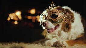 Een hond in een Carnaval-masker ligt warm door de open haard royalty-vrije stock afbeelding
