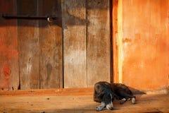 Een hond in de ingang van een huis royalty-vrije stock fotografie