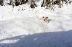 Een hond in de sneeuw Stock Fotografie