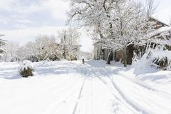 Een hond in de sneeuw Stock Foto