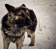 Een hond in de sneeuw Royalty-vrije Stock Afbeelding