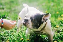 Een hond die de bloem bekijken Stock Foto's