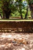 Een hond die in de schaduw van sommige bomen vanaf de middag su dutten royalty-vrije stock afbeelding